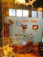 Undersea Exhibit La Habra Childrens Museum Plastic Extrusion Kelp
